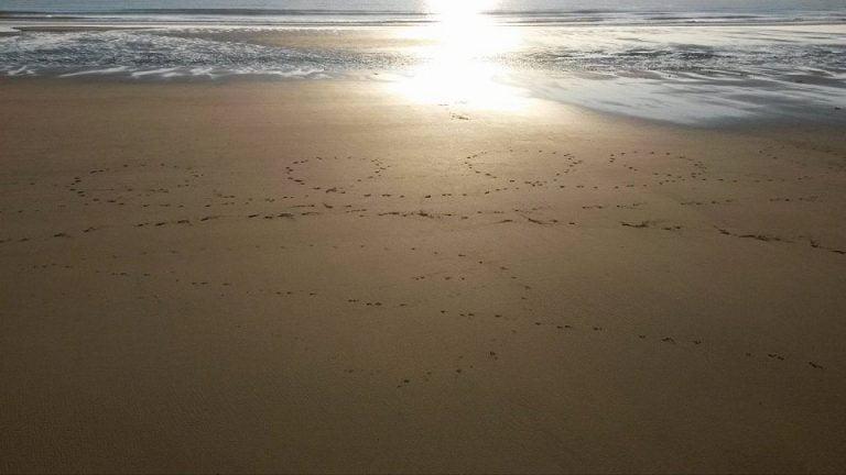 pearl thief uk 0 doggo footprints